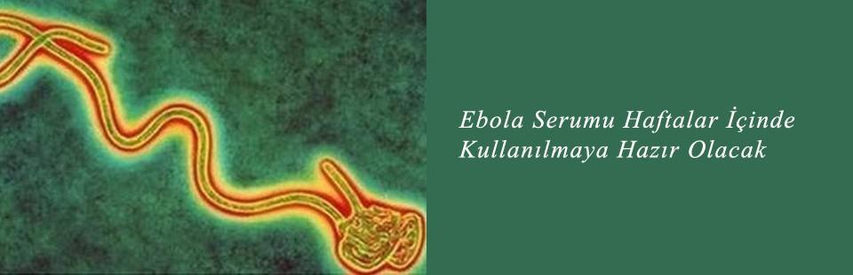 Ebola Serumu Haftalar İçinde Kullanılmaya Hazır Olacak