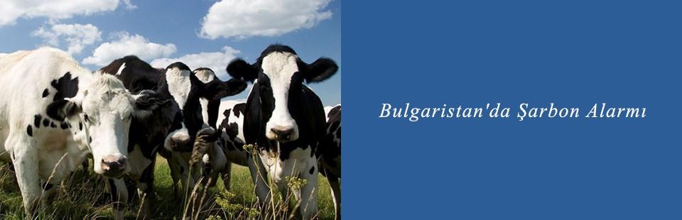 Bulgaristan'da Şarbon Alarmı