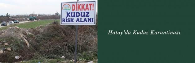 Hatay'da Kuduz Karantinası