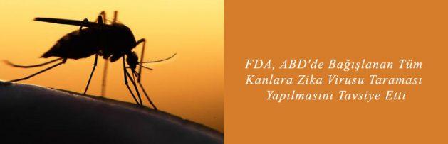 FDA, ABD'de Bağışlanan Tüm Kanlara Zika Virusu Taraması Yapılmasını Tavsiye Etti