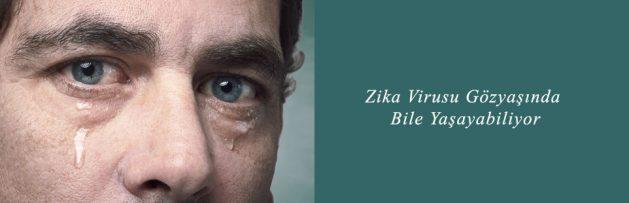 Zika Virusu Gözyaşında Bile Yaşayabiliyor