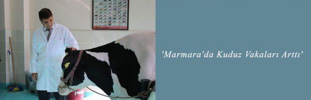 'Marmara'da Kuduz Vakaları Arttı'