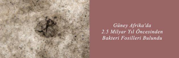 Güney Afrika'da 2,5 Milyar Yıl Öncesinden Bakteri Fosilleri Bulundu